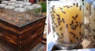 Dieser DIY-Beutenstock könnte uns helfen, Bienen zu retten und unsere Umwelt zu schützen