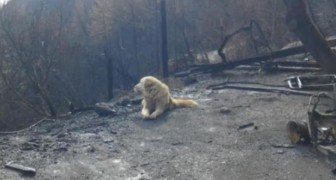 Ein Hund wartet Wochen auf die Rückkehr der Besitzer, obwohl die Flammen das ganze Haus zerstört haben