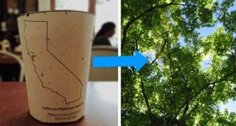 Questi bicchieri da caffè biodegradabili contengono dei semi: quando li getti, diventano alberi