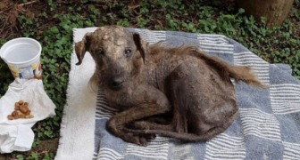 A woman finds a dog close to death and ignored by everyone but after 3 months the dog is unrecognizable