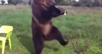 The Compilation of dancing Animals that will change your Day