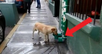Peruvian policemen install water and pet food dispensers for stray dogs, and their gesture receives global praise