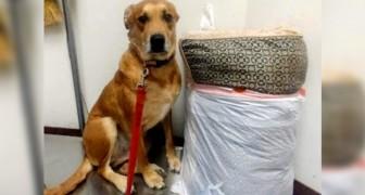 Den blir övergiven av sin ägare tillsammans med sin hundkoja och sina leksaker, men kommer att starta ett nytt liv