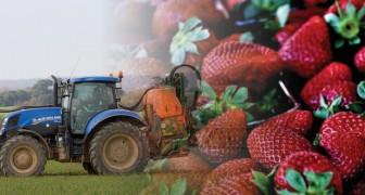 Queste sono la frutta e la verdura più contaminate dai pesticidi che bisognerebbe sostituire con quelle biologiche