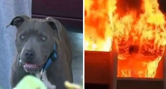 The whole house catches on fire with a baby girl inside, but the family pit bull's action saves her life