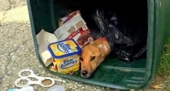 A woman gets rid of her dog by throwing it into a dumpster and it is found after 6 days, almost dead!