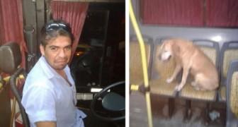 Busschauffören ser en skrämd hund i regnet och en kvinna lyckas fånga hans rörande gest på bild