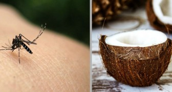El aceite de coco: fácil de preparar en casa y óptimo repelente natural contra los mosquitos
