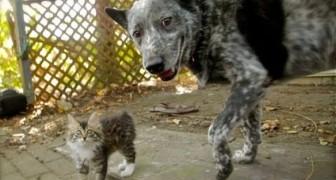 Ein Hund und ein behindertes Kätzchen begeistern das Netz