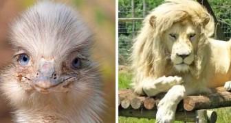 23 animali che meriterebbero la copertina di un giornale per quanto sono venuti bene in foto