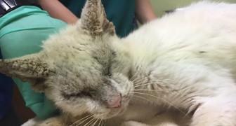 Dopo mesi di cure un gatto randagio riapre gli occhi e lascia tutti increduli per la sua bellezza