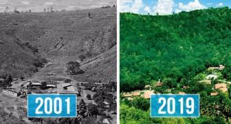 Een echtpaar plant 2 miljoen bomen in 20 jaar, waardoor een heel bos tot leven komt