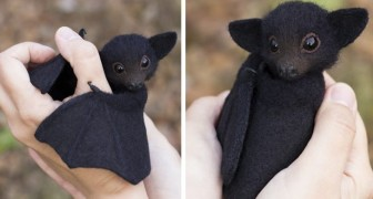 Deze kunstenares maakt dieren van gekaarde wol die er echt uitzien: dit zijn haar beste werken