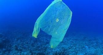 Le bluff des sacs biodégradables : après 3 ans, ils sont encore intacts. Une nouvelle étude le révèle