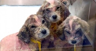 Trova dei cuccioli abbandonati in una scatola e li porta a casa: la loro trasformazione è miracolosa