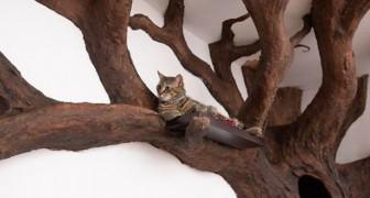 Ein Mann stellt einen schönen Baum in seinem Wohnzimmer nach, und die Katze scheint das Endergebnis sehr zu schätzen