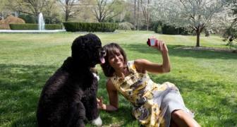 Wie een hond heeft maakt meer selfies met hem dan met zijn partner: dat onthult een eigenaardig onderzoek