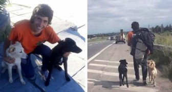 He finds two abandoned dogs, but no bus transports animals! So he walks 870 miles (1,400 km) to bring them home with him