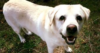 Baffi d'argento: arriva la prima casa di riposo per cani meno fortunati, alle porte di Roma