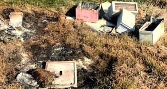 Vandalen verwoesten tientallen bijenkorven zonder reden: meer dan 500.000 bijen voor altijd verloren