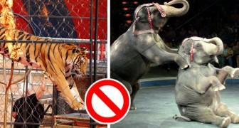 Großbritannien verbietet die Verwendung von Wildtieren in Zirkussen