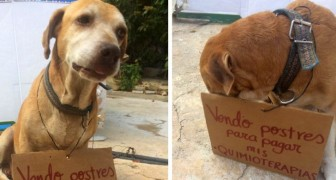 En hund säljer sötsaker för att betala sin kemioterapi, här är bilden som har rört alla till tårar
