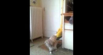 Militar recebe as boas vindas calorosas de seu gato