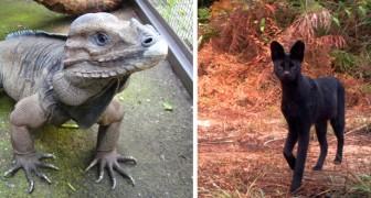 15 einzigartige und rare Spezies von deren Existenz ihr nichts wusstet