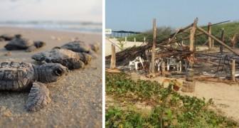 Vandalen verwüsteten und zündeten ein Rettungslager für Meeresschildkröten an
