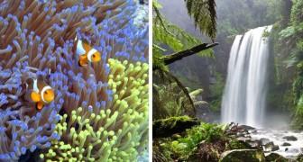 Non solo la Barriera Corallina: anche la foresta pluviale più vecchia del mondo sta scomparendo, ma nessuno agisce
