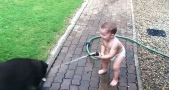 Funny Water Games between a child and his Labradors