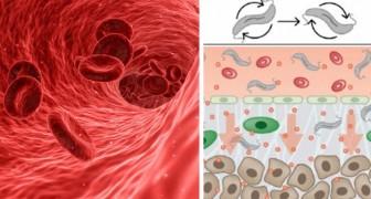 Mini-Roboter, die Medikamente an Krebszellen weiterleiten: Die Testergebnisse sind ermutigend