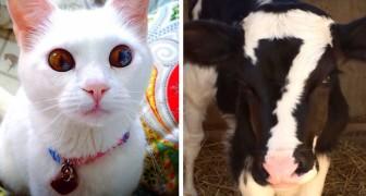 30 animaux devenus de vraies raretés grâce au mélange génétique