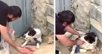 Ein Hund lebte grausam gefesselt und verlassen: Die Geste des Mannes ist uns allen eine Lehre