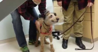 Sweet Dog Meet His Family After an eye operation