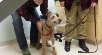 O cachorro que encontra sua família depois de voltar a enxergar