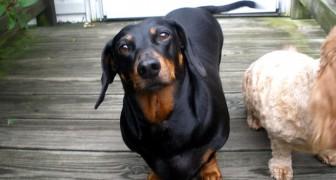 Nuestros perros entienden aquello que les decimos: lo revela una sorprendente investigación