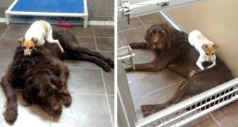 Desde quando foram abandonados no refúgio, estes dois cães nunca mais pararam de se abraçar