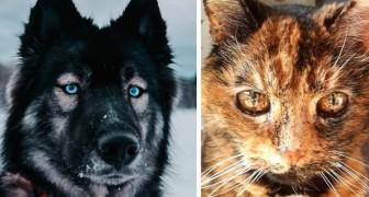 Deze 16 unieke dieren bewijzen dat de natuur een onvoorspelbare artistieke ader heeft