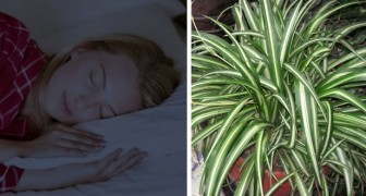 According to NASA putting one of these five plants in your house improves the air quality and therefore your sleep