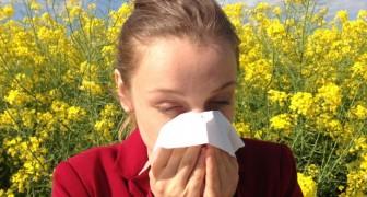 Les allergies saisonnières sont de plus en plus agressives à cause des niveaux de dioxyde de carbone dans l'atmosphère : voilà pourquoi