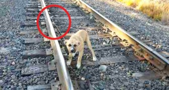 This dog was abandoned on a railway track, but a man arrives at the right time and saves him!