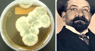 Le premier à découvrir la pénicilline n'était pas Fleming, mais un médecin italien dont presque personne ne connaît le nom