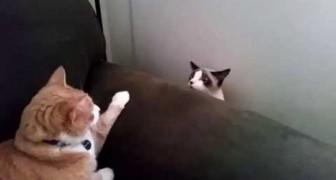 Dos gatos que jamas se habian conocido antes.