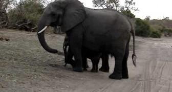 Süßer Elefant erschrickt vor sich selbst