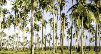 Auf den Philippinen schreibt ein neues Gesetz vor, dass Studenten 10 Bäume pflanzen müssen, um ihren Abschluss zu machen