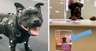 15 chiens qui ont un vrai travail, et qui le font probablement mieux que vous
