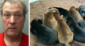 Een man bindt 8 pups vast en gooit ze in het vuilnis: de straf die hij krijgt is voorbeeldig