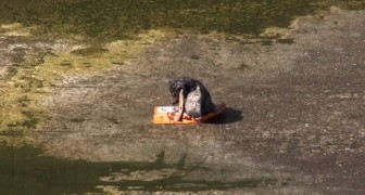 Un chiot spécial est jeté et abandonné dans un canal, mais après quelques jours il commencera une nouvelle vie