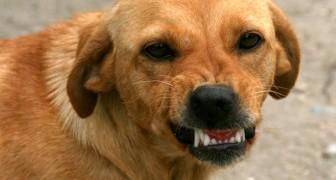 Jouw hond kan negatieve mensen RUIKEN en proberen je tegen hen te beschermen: wetenschappelijk onderzoek bevestigt het